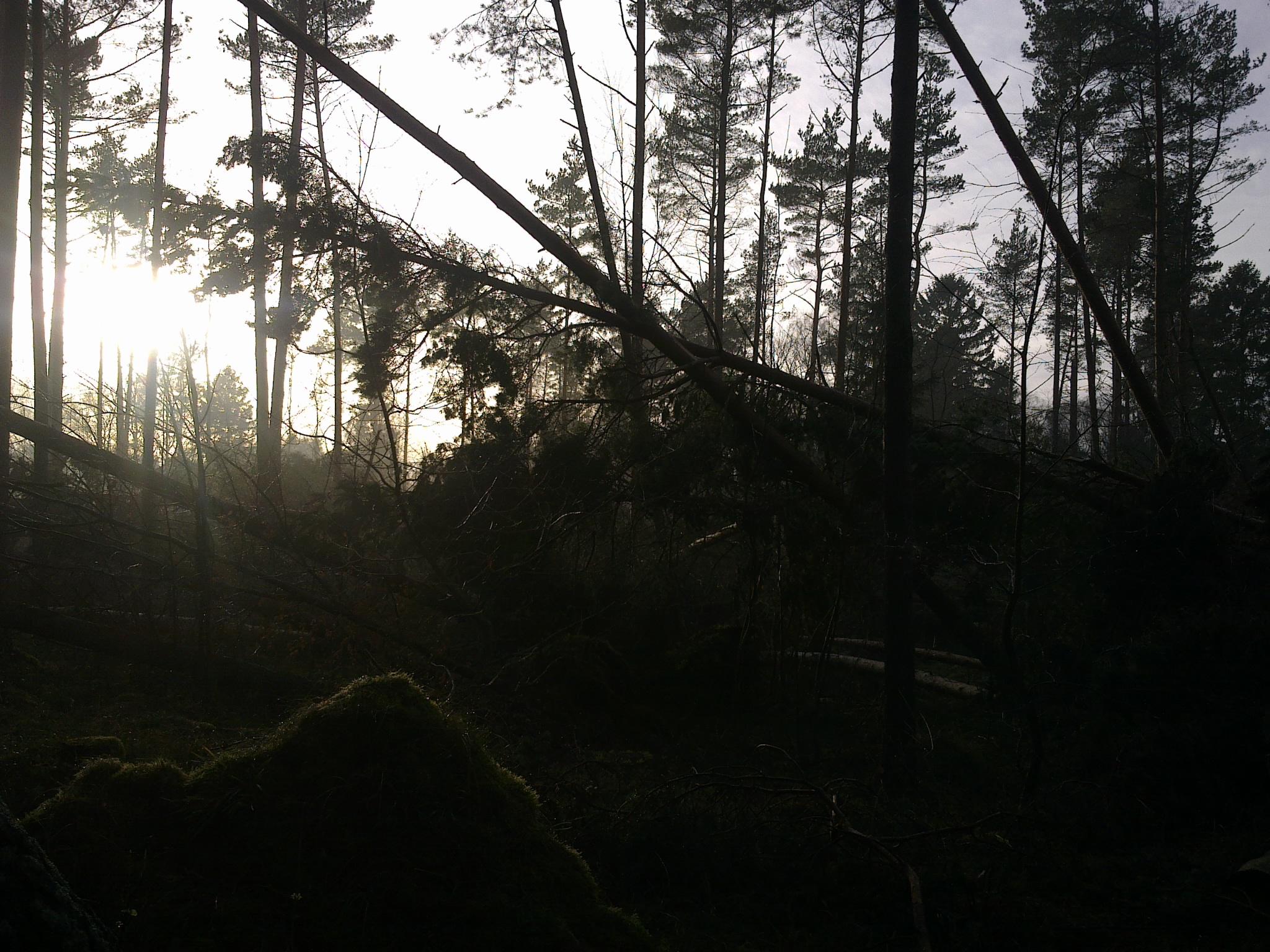 Stormens rov. Tisvilde Hegn ved Ramløse Å. Foto: Lars Rudolph ©
