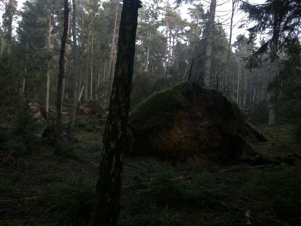 Rodvæltede træer i Tisvilde Hegn ved Ramløse Å. Foto: Lars Rudolph ©